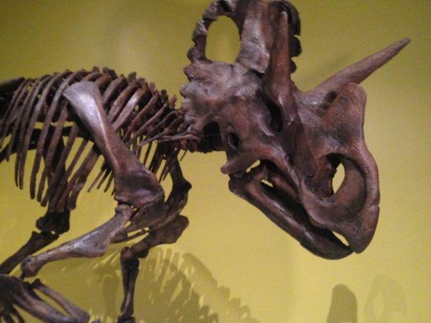 Wendiceratops!