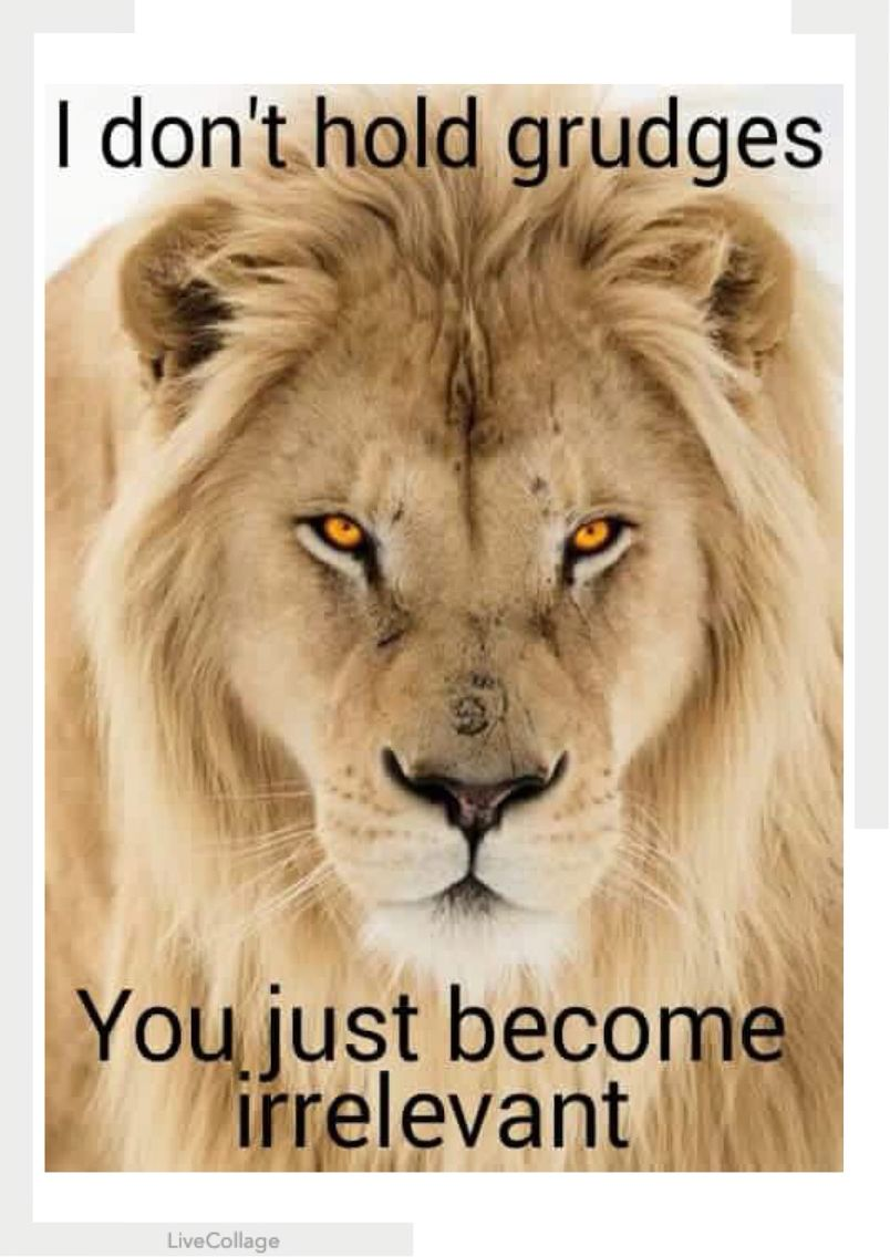 Pretty Much Lion Quotes Lions Leo Quotes