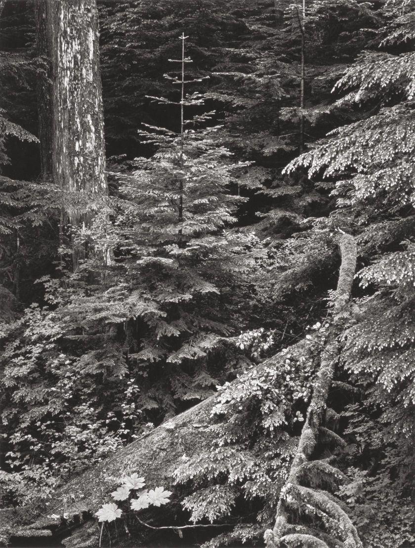 Photographs:Gelatin Silver, ANSEL ADAMS (American, 1902-1984 ...