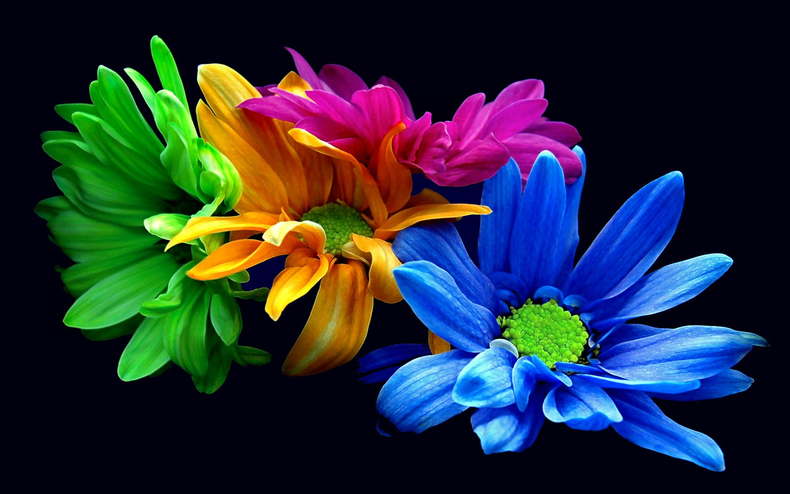 Earth - Flower - Blue - Opus - Green - Orange - Leaf ...