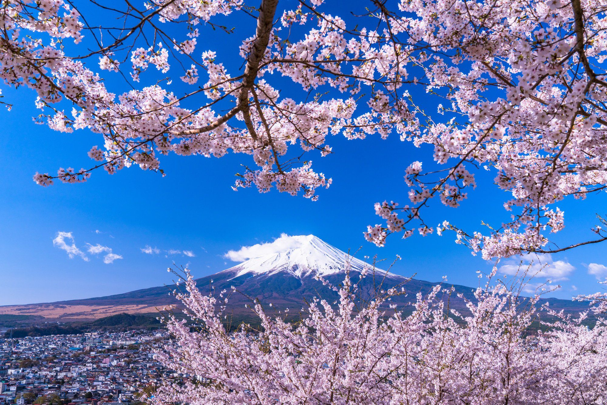 7 Great Cherry Blossom Spots Near Tokyo In 2020 Matcha Japan Travel Web Magazine There Are Countless Cherry Blosso Tokyo Cherry Japan Travel Ancient Cities
