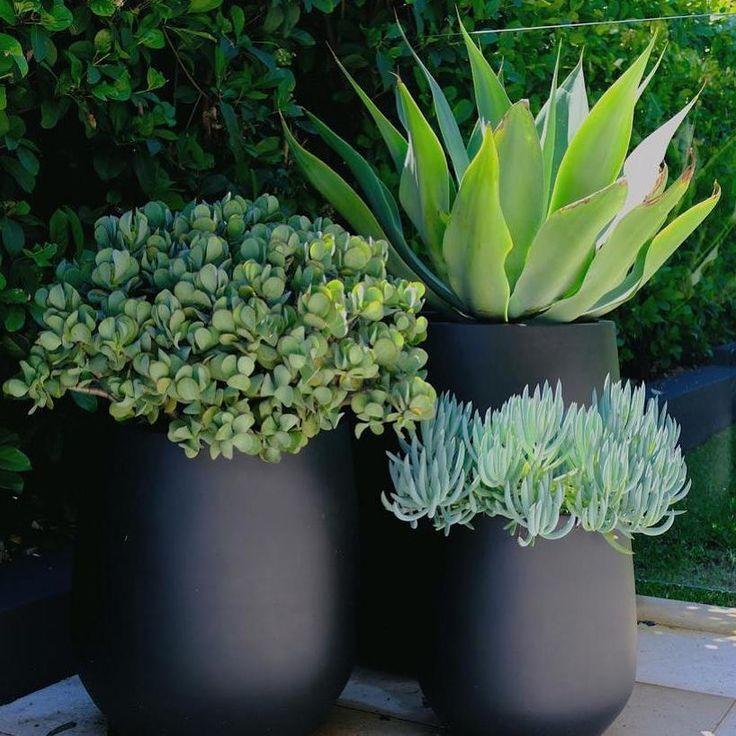 Potted Plants Outdoor Patio, Outdoor Patio Plants