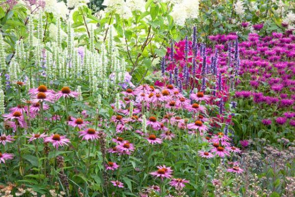 A Cheerful Border Idea With Monarda Agastache And Echinacea Perennials Plants Plant Combinations