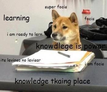 3e4df6e6e2faf0f0ad450b5ec7d2daff knowdlege is power~ doge pinterest doge