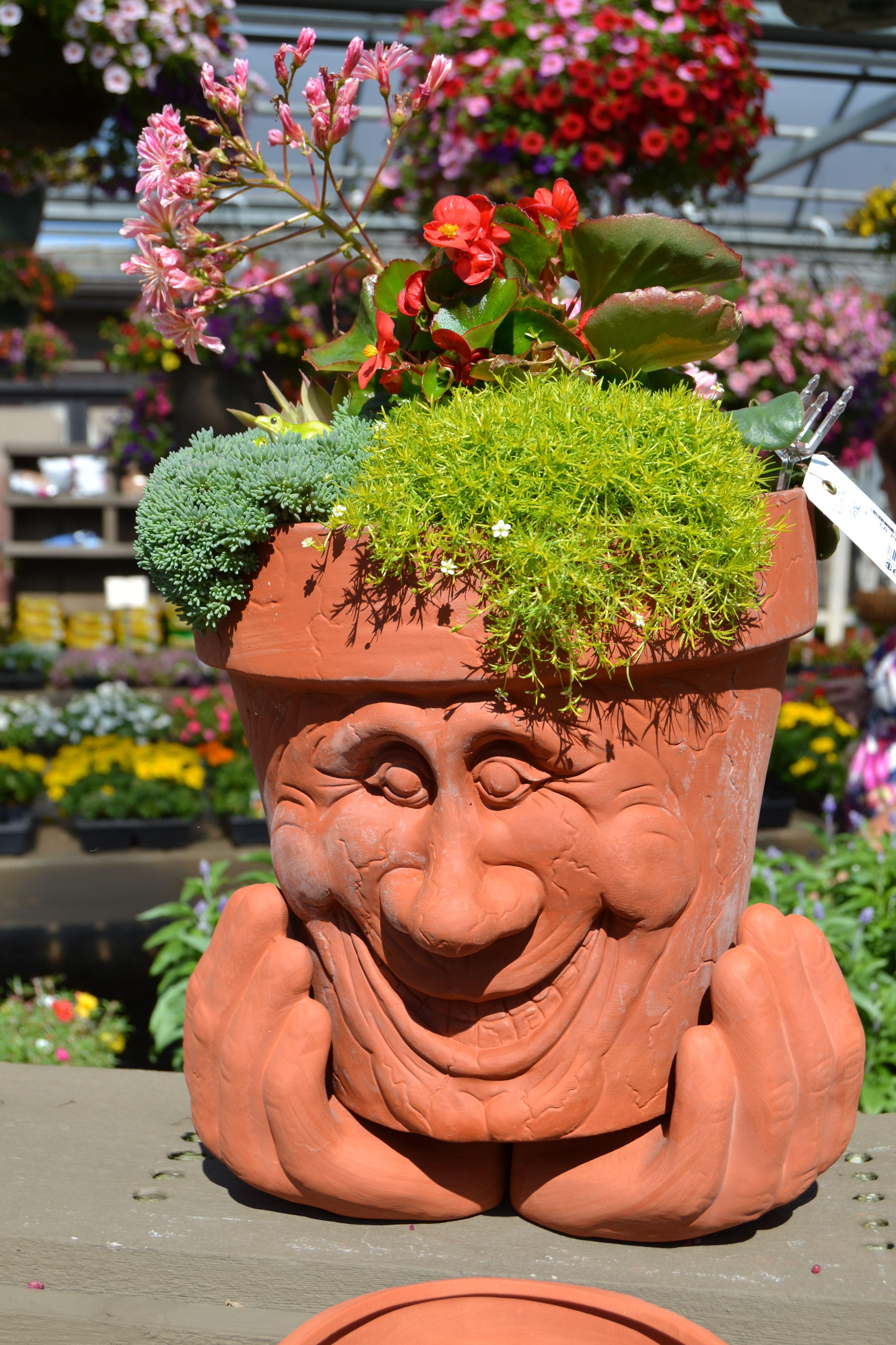 Succulent Gardening At Baker S In Columbus Oh Perennials