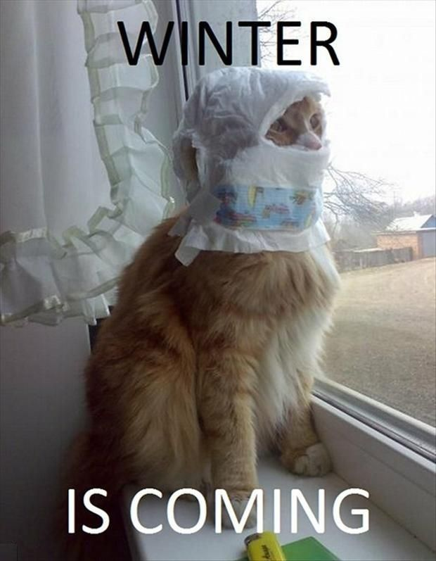 Funny Winter Is Coming Cat