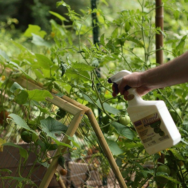 Neem Oil Works Wonders For Your Plants And Garden