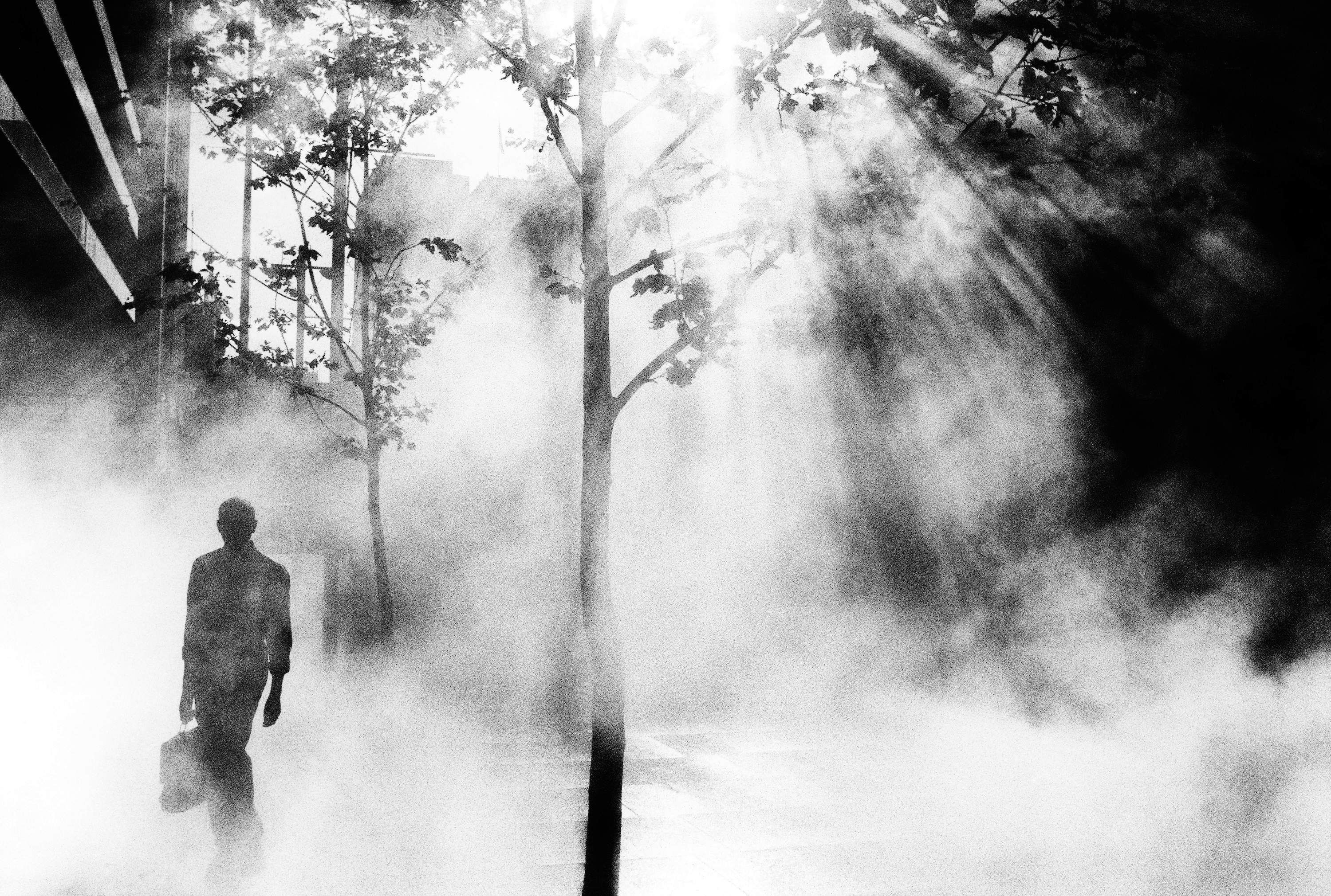 Image result for trent parke bethany