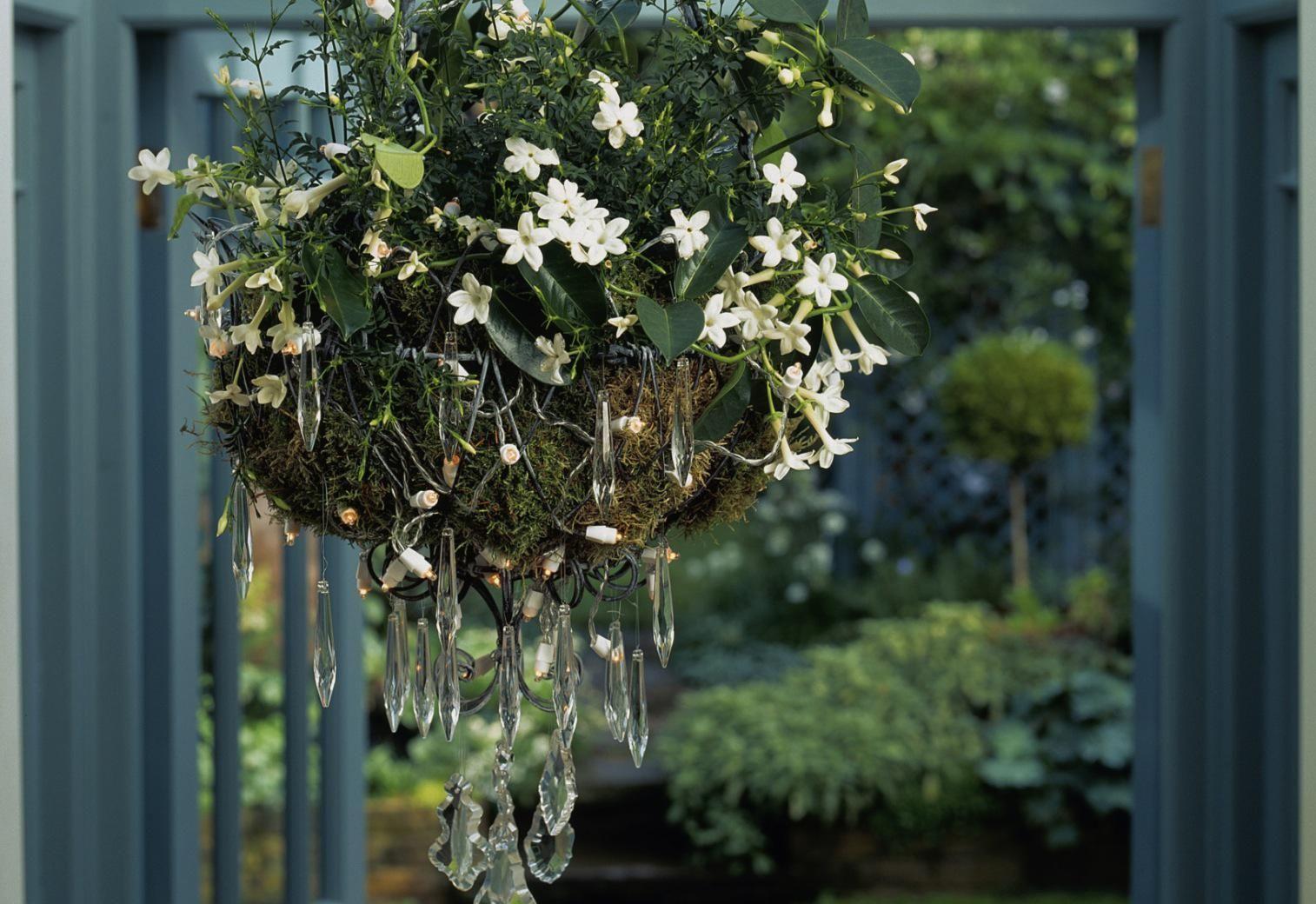 How To Grow Jasmine Indoors Bridgeport Plants Trees