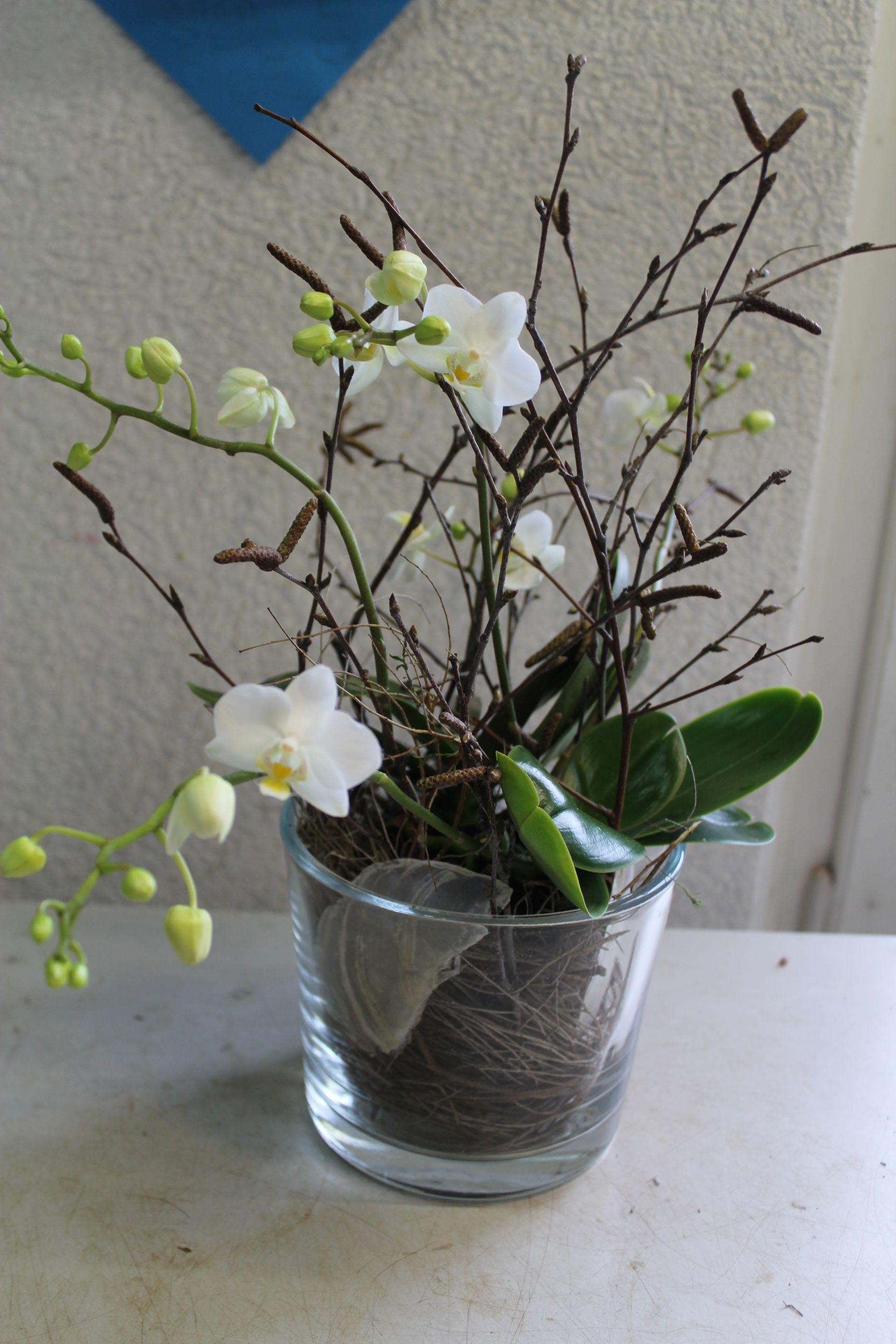 Diy weisse phalaenopsis orchidee selber in glas eintopfen nat rlich dekorieren ideen - Dekoration mit orchideen ...
