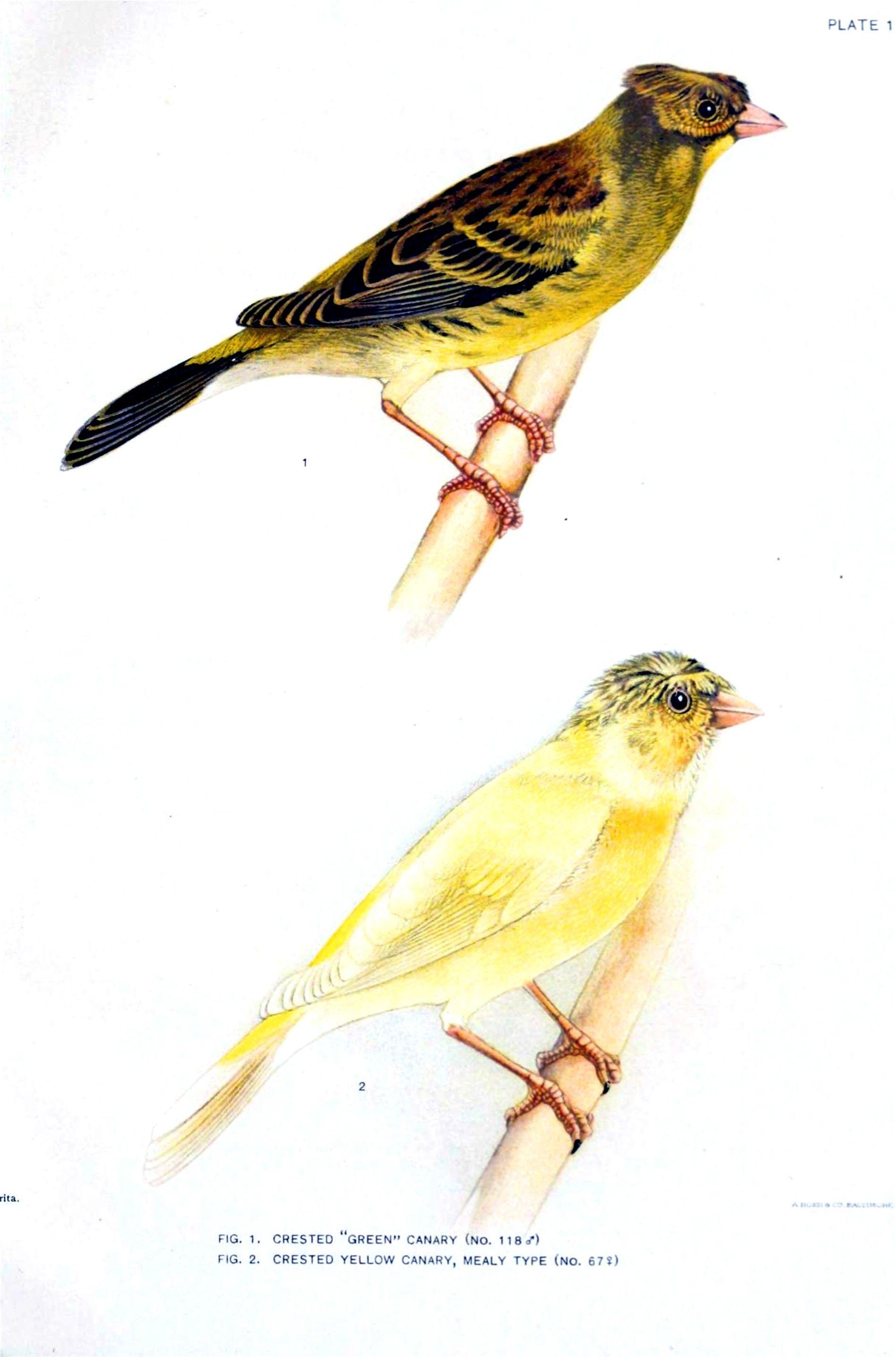 Pin By Angela Clarke On Scientific Illustration Scientific Illustration Birds Love Birds