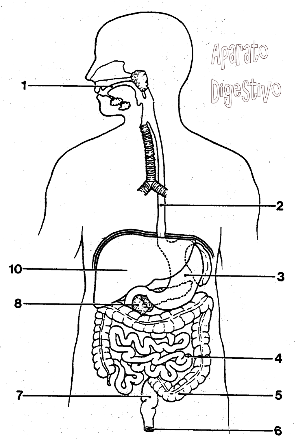 Explora Esta Imagen Interactiva Digestivo By Begona