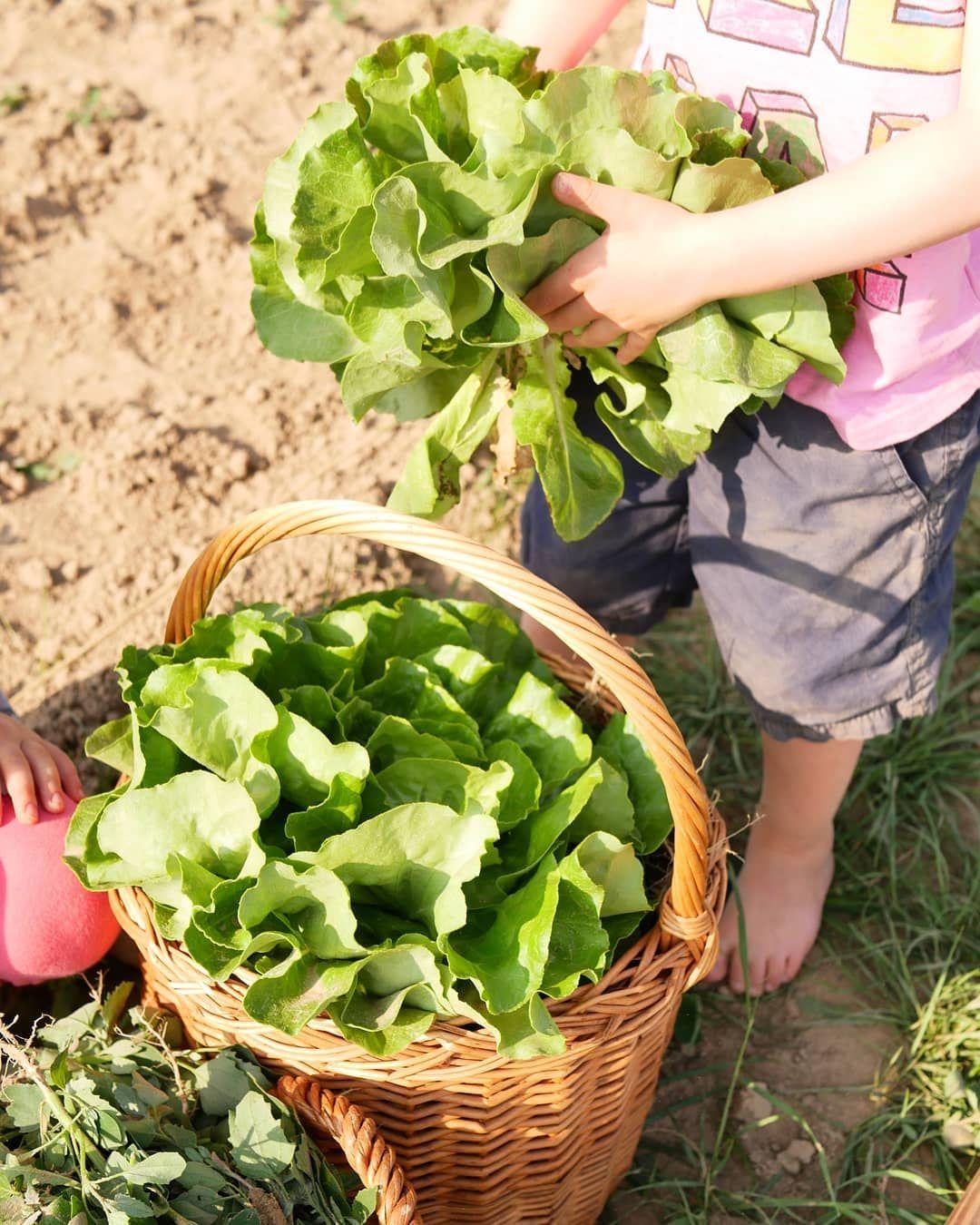 mit kindern ein kleines gemüsefeld bewirtschaften. urban gardening