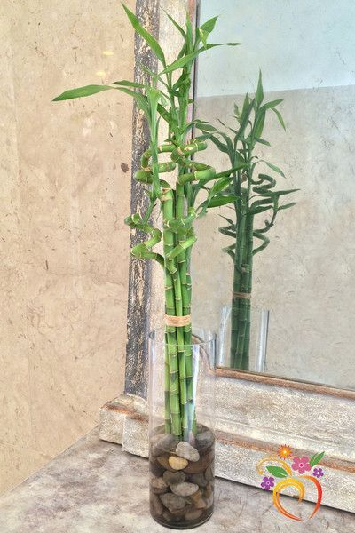 Lucky Bamboo Local Delivery Only