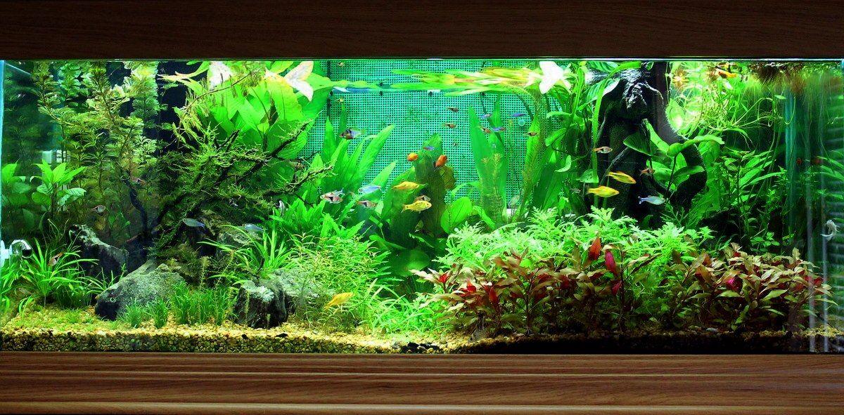 Kseanm247 75 Gallon Community Tank Your Tanks Community Tanks Planted Aquarium Aquascape