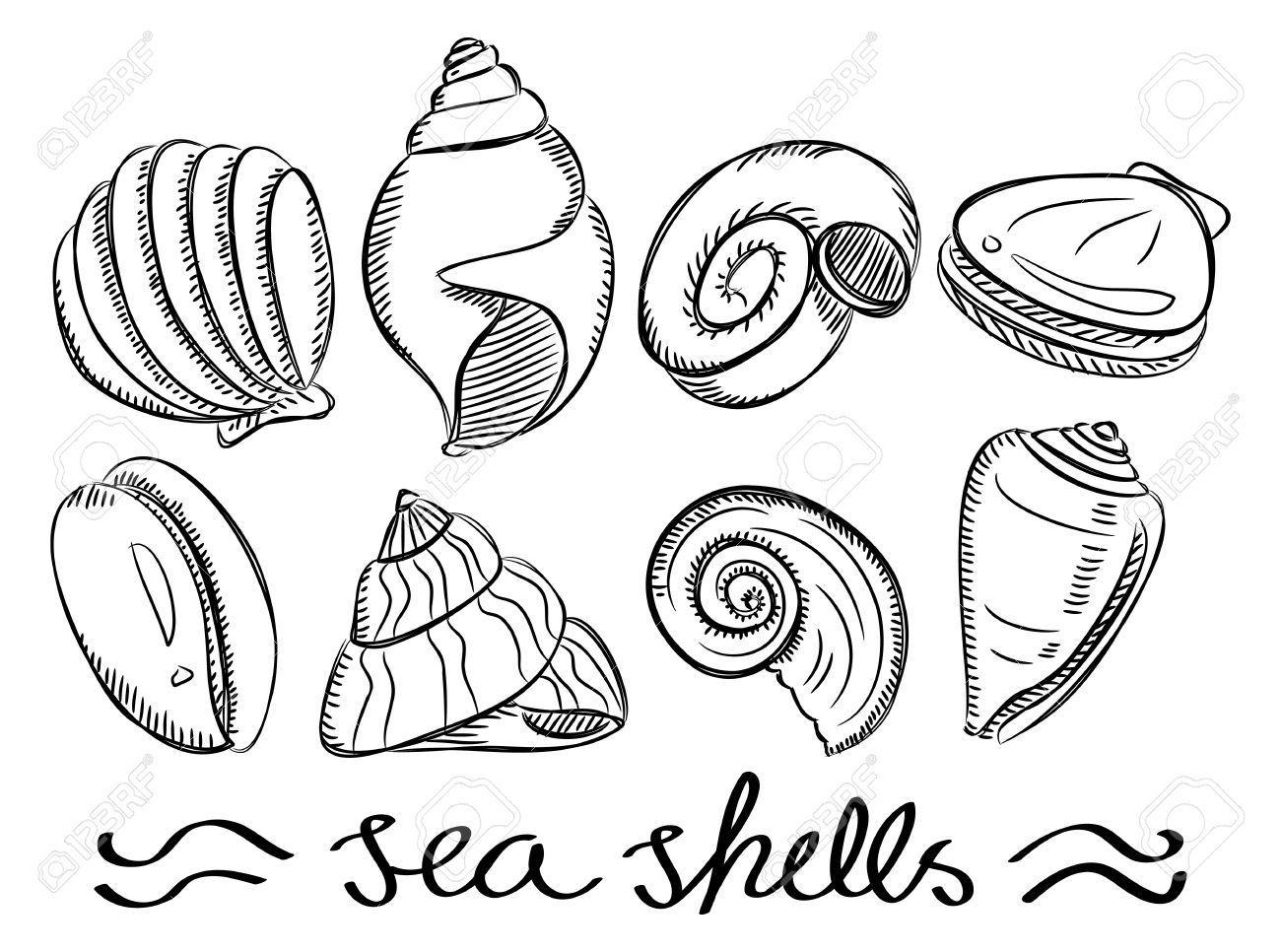 Doodles Shell Google Zoeken Strand Spullen Schelpen Pentekeningen