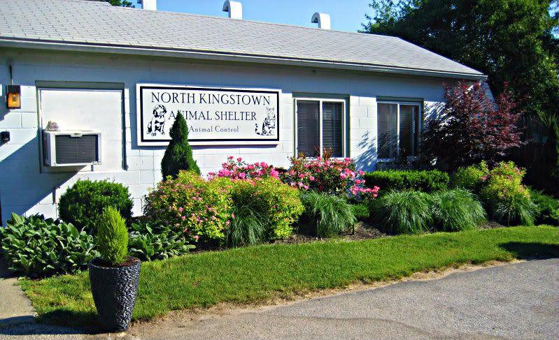 18+ Rhode island animal shelters ideas