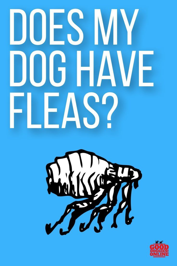 Does my dog have fleas 5 signs to know it good doggies