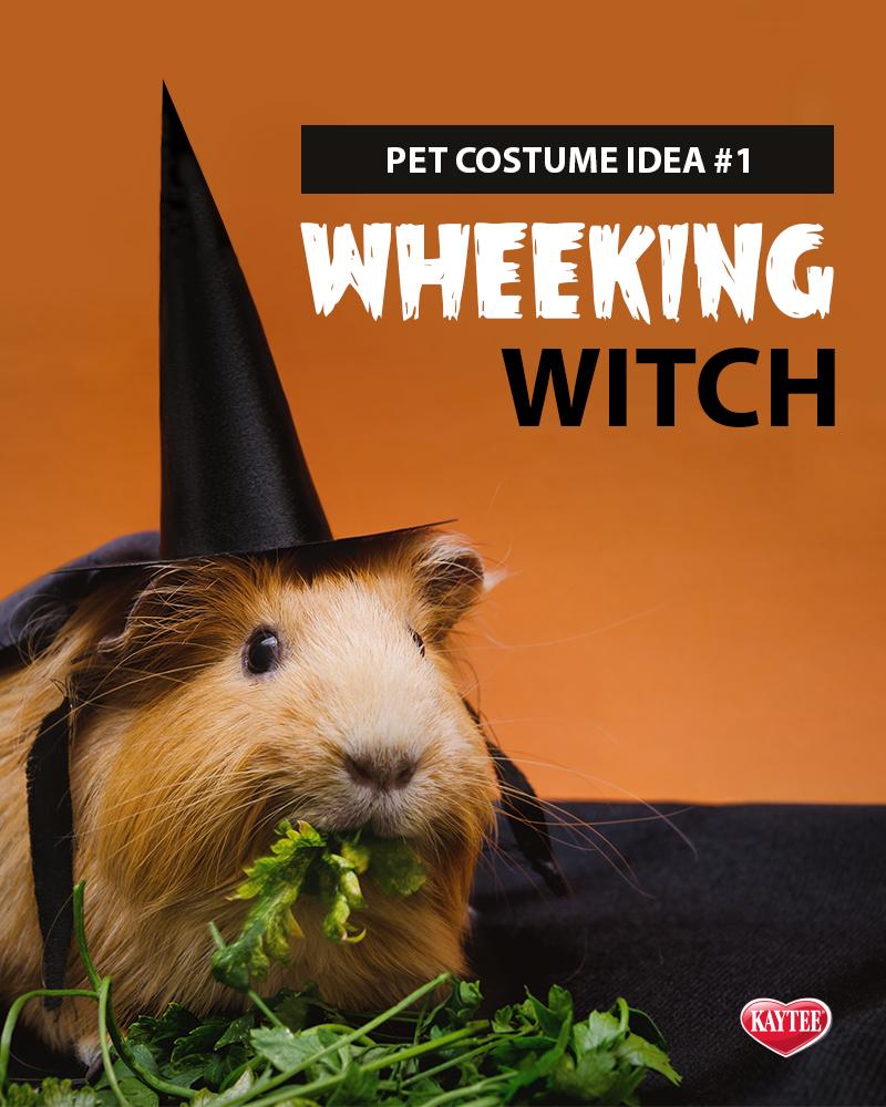 PetCostume idea Wheeking Witch. Pet halloween costumes