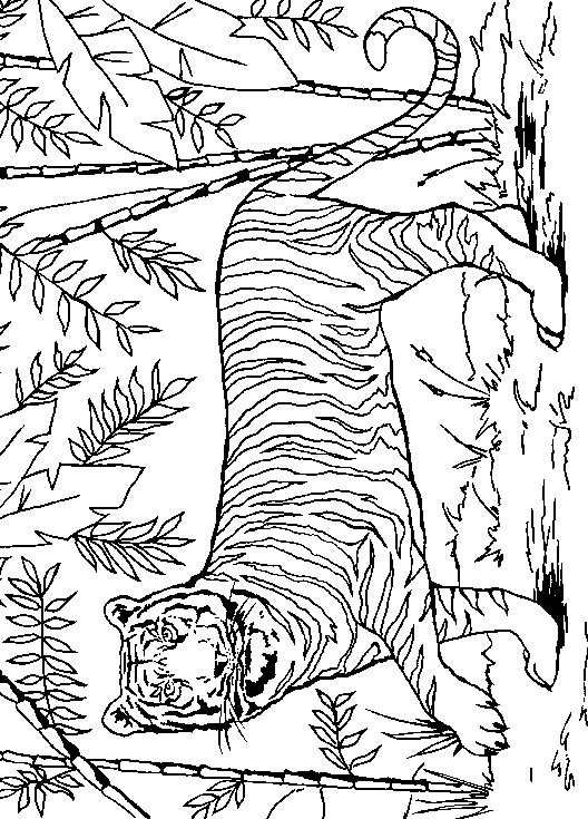 Pin By One Two On Coloring Pages Jungle Coloring Pages Coloring