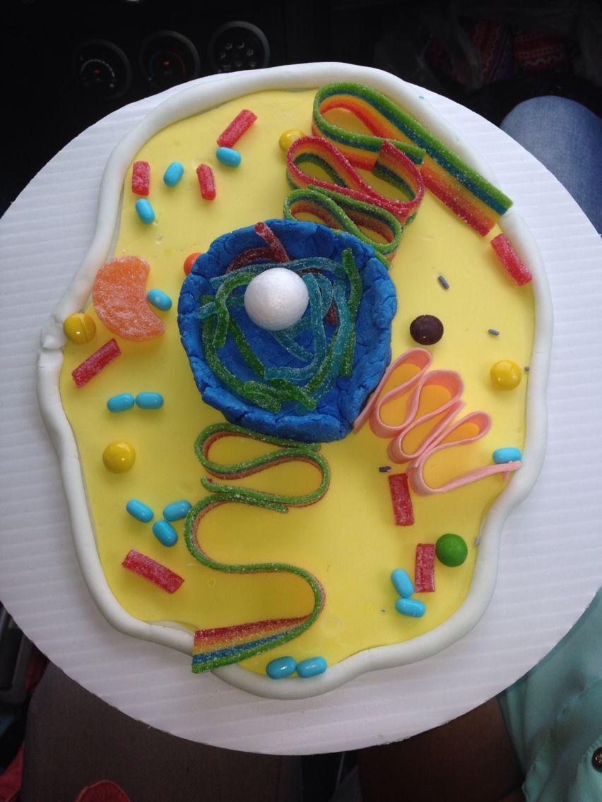 Maqueta con dulces(célula animal) | BIZCOCHO | Pinterest | Célula ...