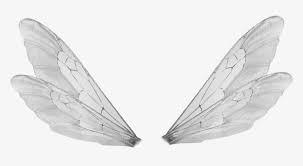 Bee Wings Google Search Bee Wings Wings Png Green Fairy Wings