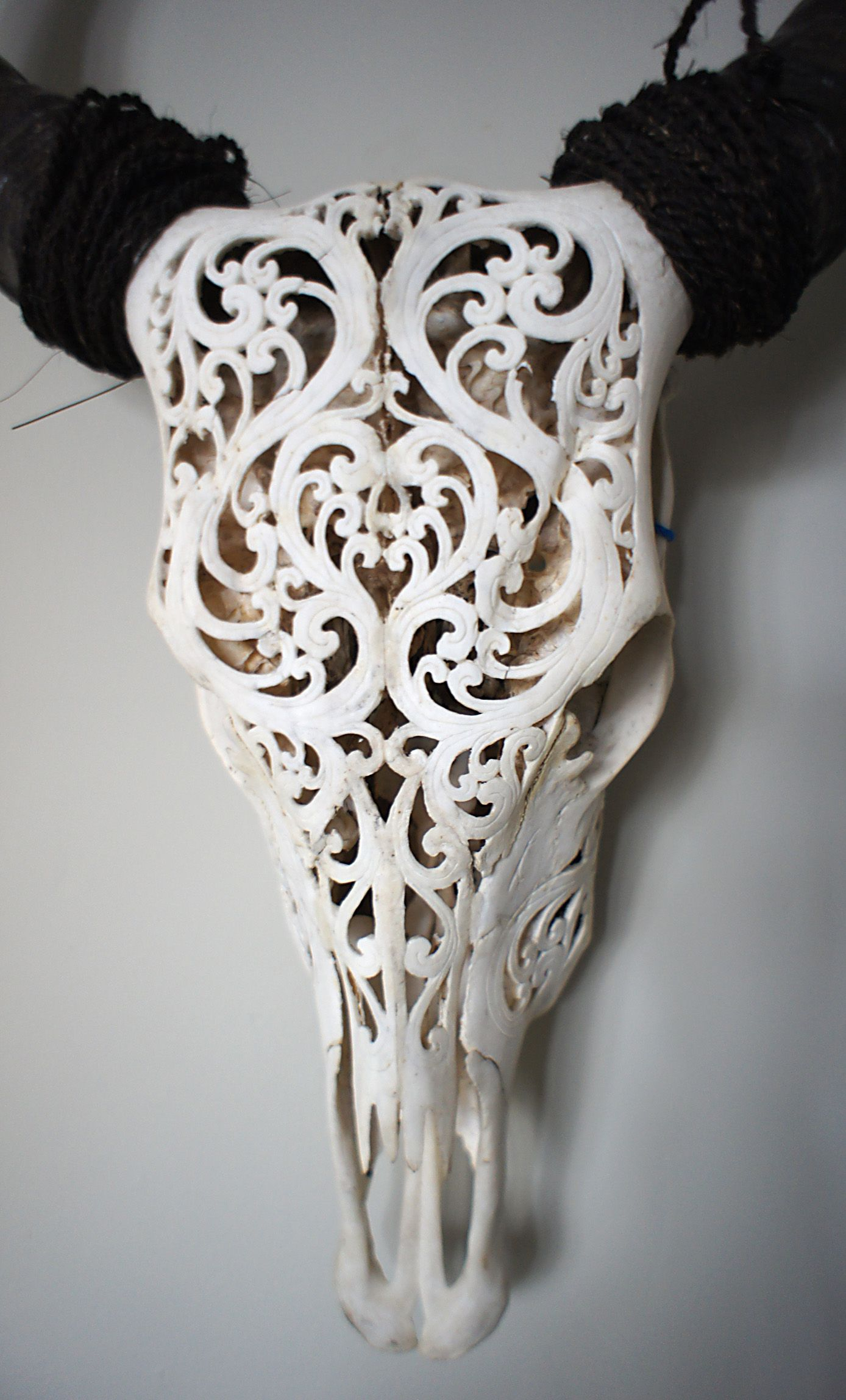 Carved skull beautiful buffalo has intricate roccoco free your mind tattoos others - Dekoration hirschgeweih ...