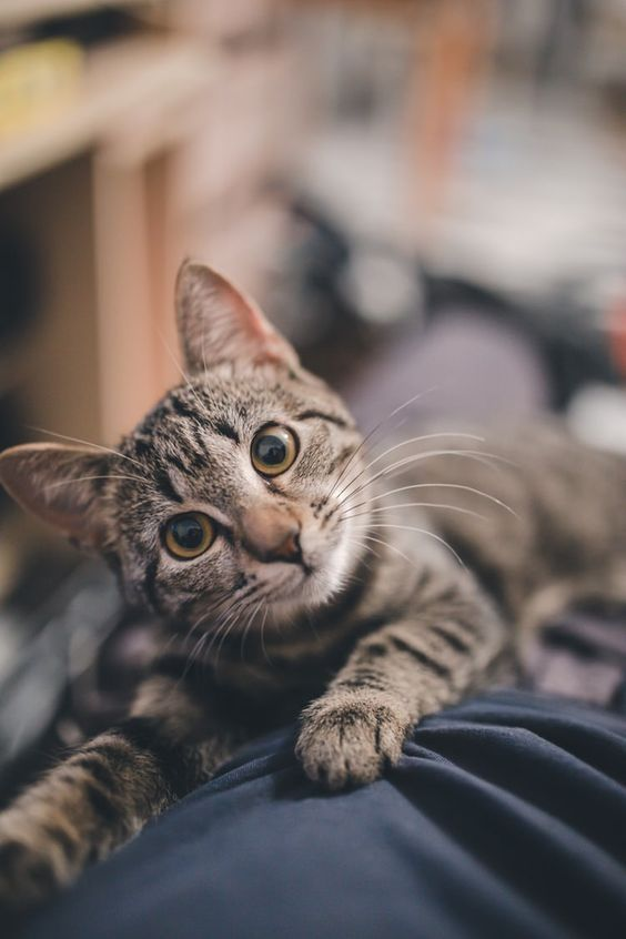 Change A Pet's Life Day: 8 Ways To Change A Cat's Life On January 24th