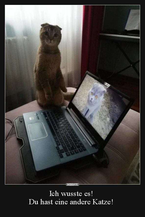 Ich wusste es! Du hast eine andere Katze!.. | Lustige Bilder, Sprüche, Witze, echt lustig #katzengeburtstag