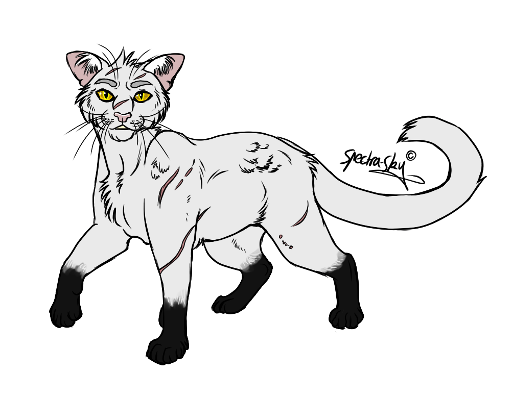4. Blackstar by SpectraSky (With images) Warrior cats
