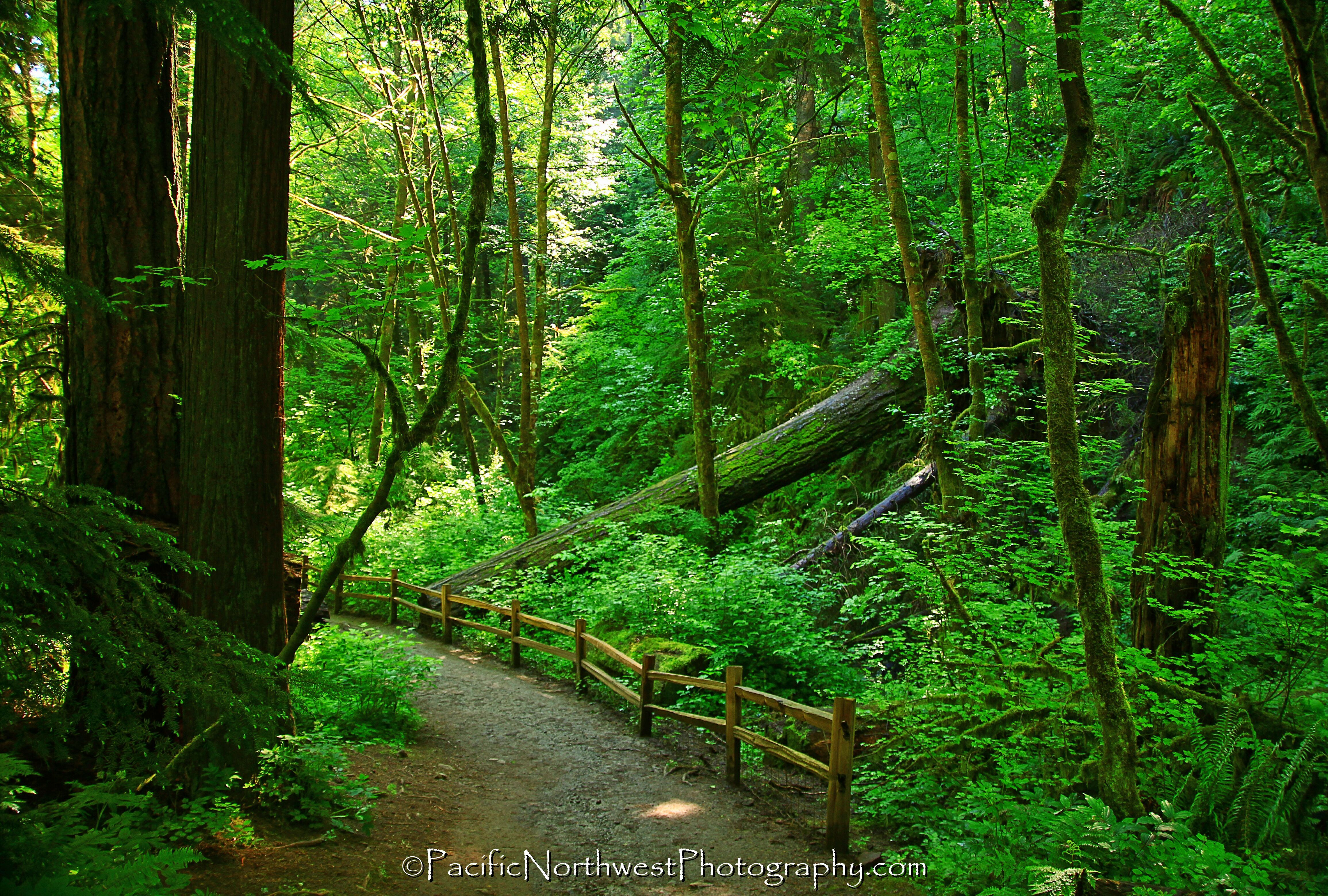 Forest Park Portland 5 170 Acre Forest Park Is The Largest City Park In The Lower 48 States Forest Park Forest Park Portland Urban Park