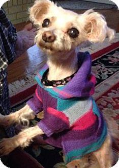 High Point Nc Maltese Meet Penelope Nc A Dog For Adoption Http Www Adoptapet Com Pet 15484498 High Point Nort Dog Adoption Maltese Dogs Dog Illnesses