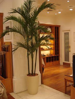 Plantas para sala areca na sala home pinterest for Plantas artificiales para interiores