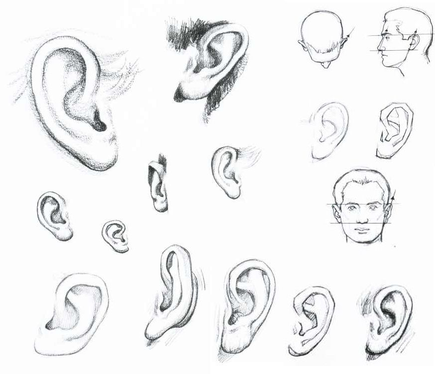 How To Draw Human Ears Painting Techniques Pinterest Drawings