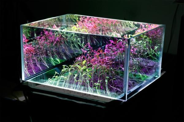 An A To Z Guide About Led Grow Lights In Your Hydroponics