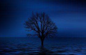 Tree, Kahl, Psychology, Loneliness