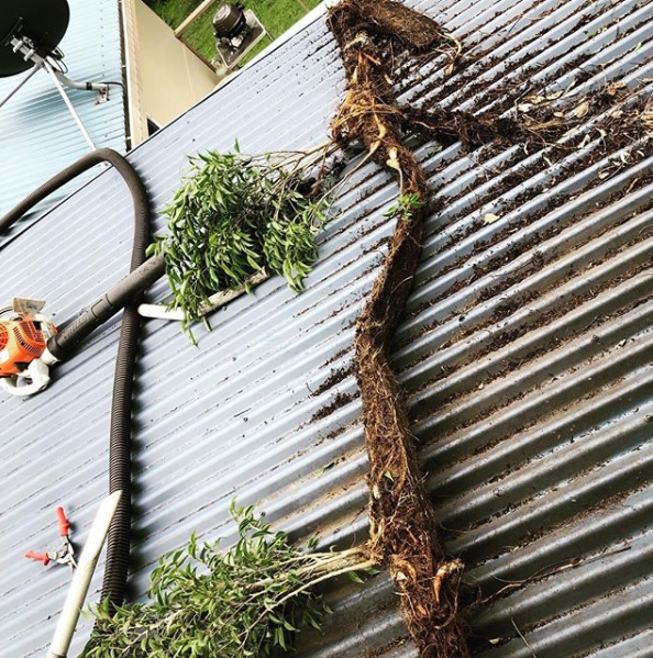 Gutter Cleaning Brisbane South