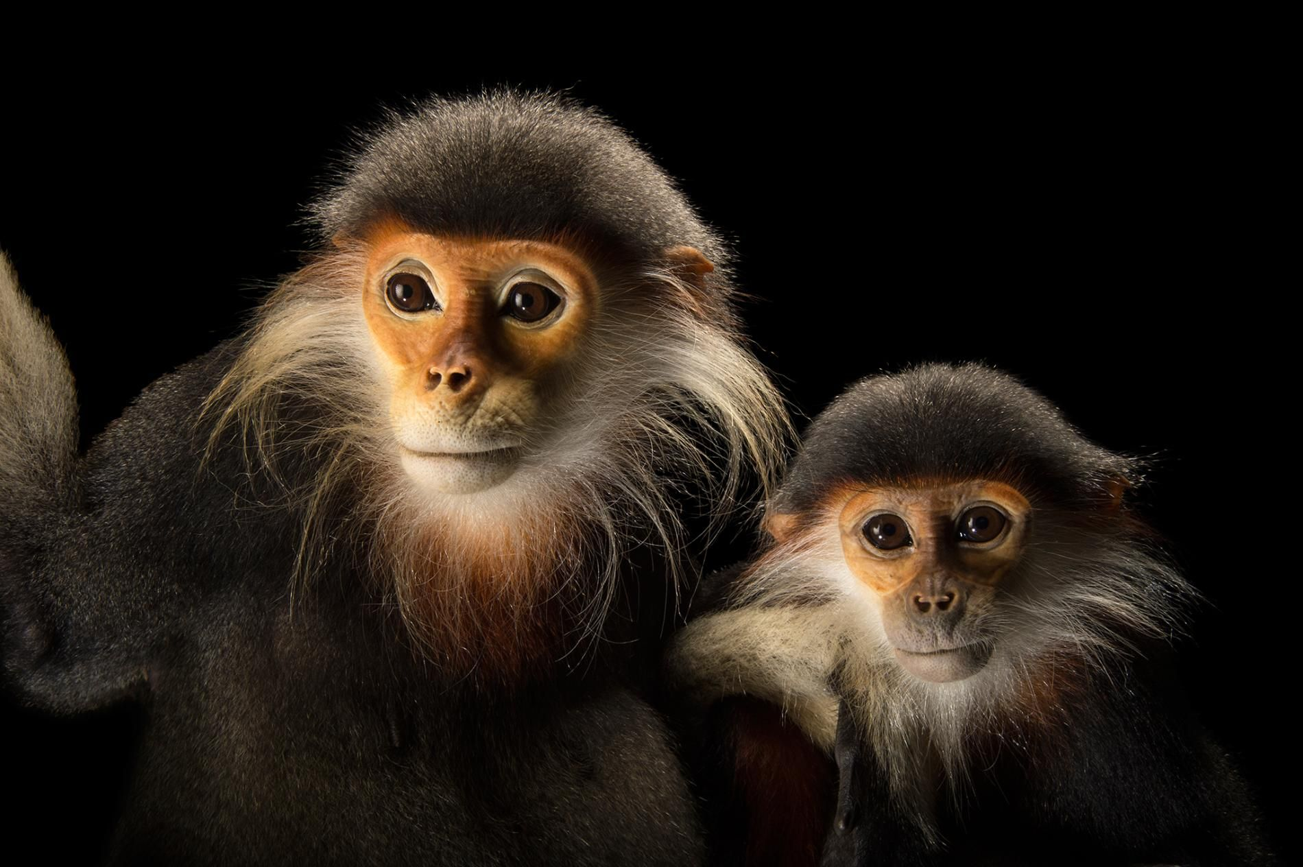Gallery Primate Portraits National Geographic Photo