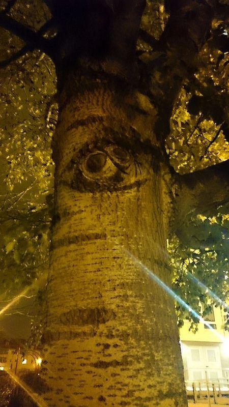 sehender Baum