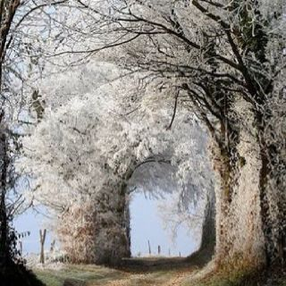 White natural arched tree-This is beautiful!