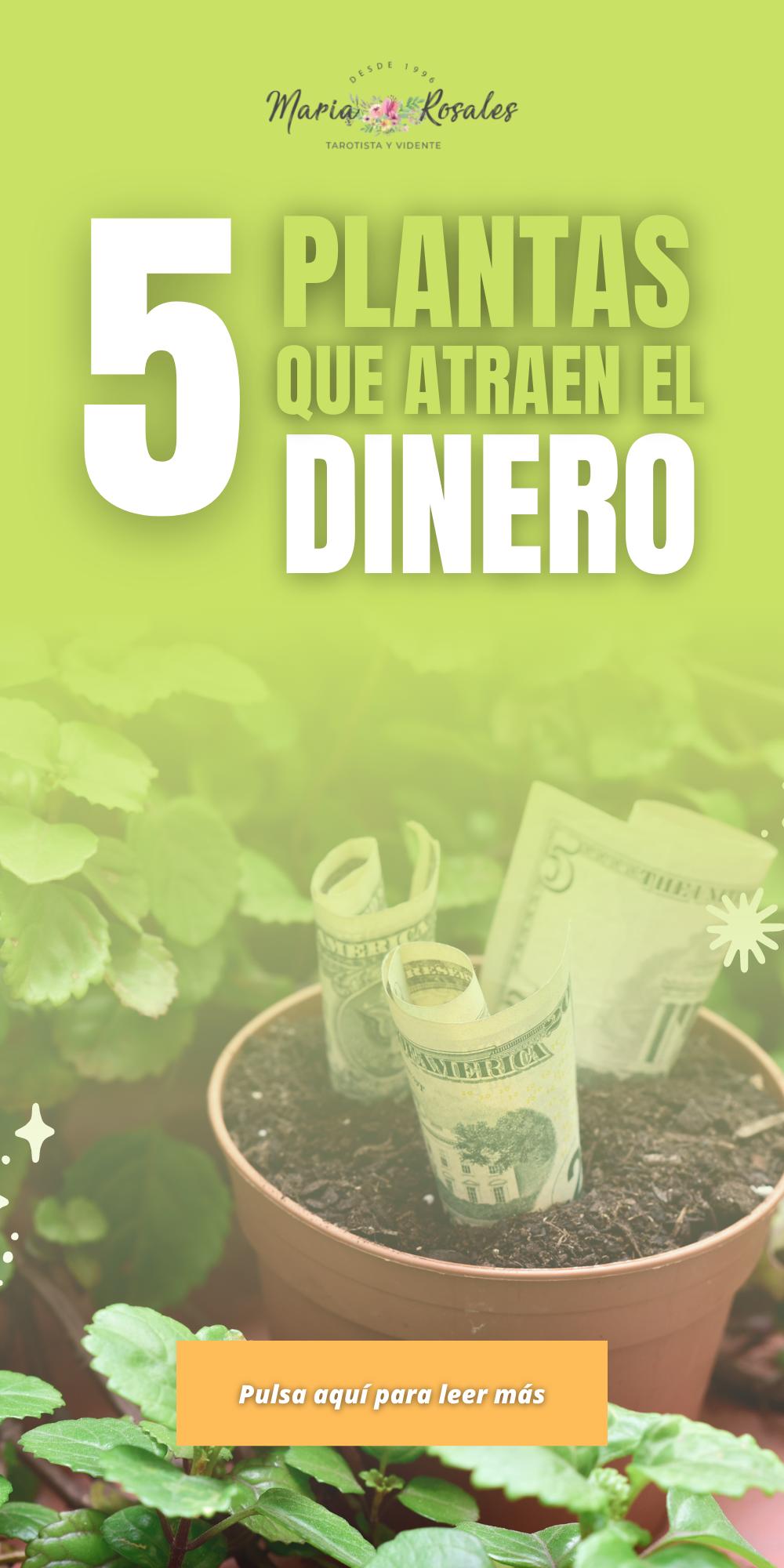 5 Plantas Que Atraen Dinero Plantas De Buena Suerte Amuletos De Buena Suerte Plantas Para Atraer Dinero