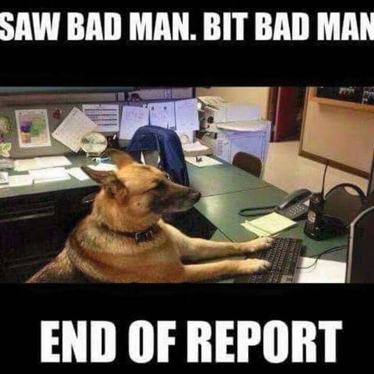 Image Result For Funny Police Dog Memes Funny Animal Pictures Funny Animals Cute Animals