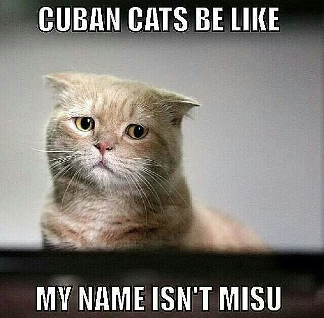 Cuban cats lol