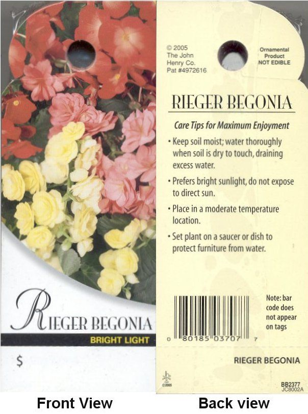 Begonia Care Card With Images Beach Gardens Plants Begonia