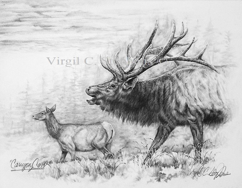 Canyon Call Pencil Drawing By Western Cowboy Artist Virgil C