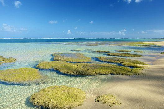 하와이 여행이 당신의 '자괴감'을 잊게 해줄지 모른다(화보)   The Huffington Post