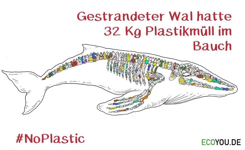 Wal Mit Plastik Im Bauch