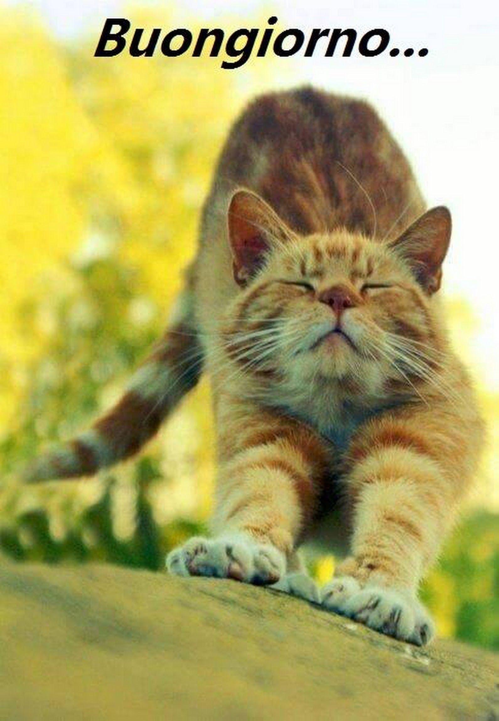 Buongiorno a tutti gatti pinterest perro gato gatos for Buongiorno con gattini