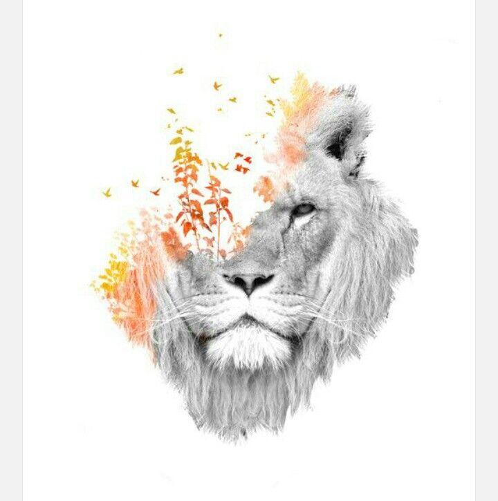 Pin by Rain Leo on L£0 | Lion art, Tattoos, Art