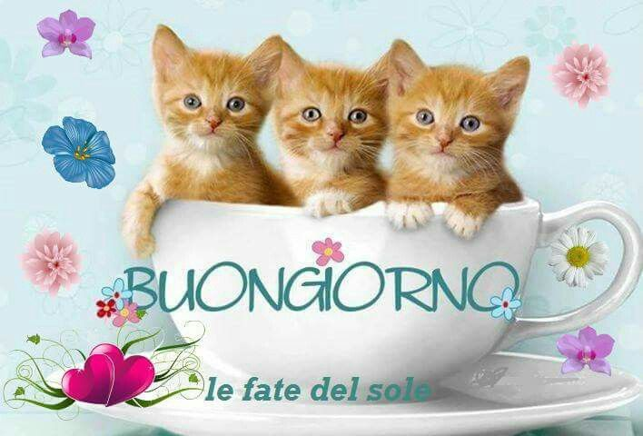 Buongiorno gatto italia y algo m s buongiorno for Buongiorno con gattini